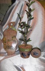 Продам набор Оливки для декора