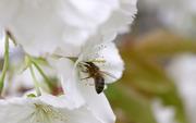 Видео уроки по пчеловодству