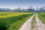 реализуем семена озимых пшеница, ячмень, рапс