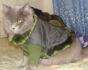 Новое замшевое пальтишко на собачку до 6-7 кг недорого.