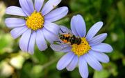 Секреты пчеловода Кривчикова