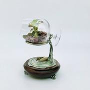 Флорариум Фитония в бокале