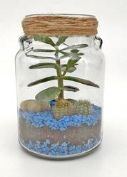 Флорариум mini,  синий